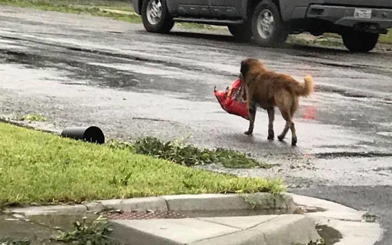Este perro huyó de 'Harvey' con todo y bolsa de alimento