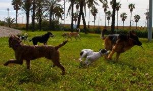 perros parque