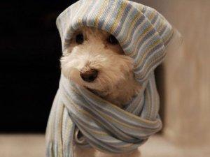 perro frio
