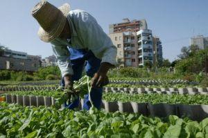 La-agricultura-urbana-florece-en-Latinoamerica