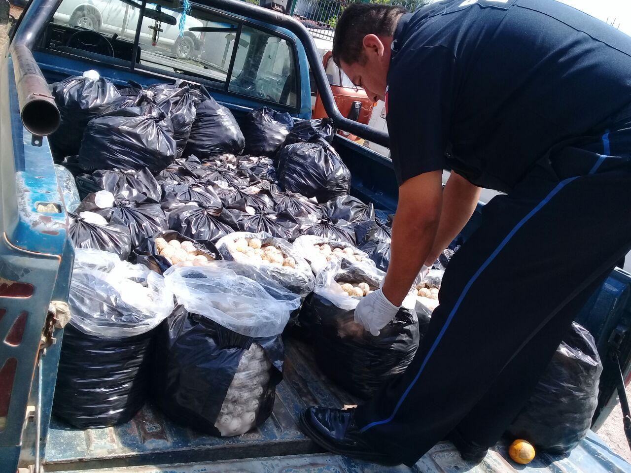 Confiscan 22 mil huevos de tortuga marina en Oaxaca