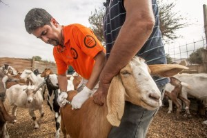 Salvando-animales