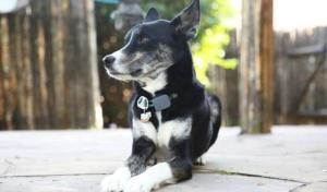 collar inteligente mascotas