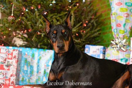 Oakley Christmas 2016