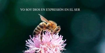 YO SOY DIOS EN EXPRESIÓN EN EL SER