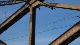 Frankfurt Eisenbahnbrücke