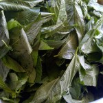 وزارة الصحة تحذر من تناول الملوخية