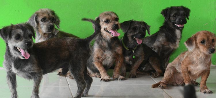 6 terriers