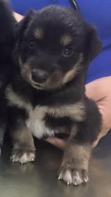 3 puppies not from petshop muscat