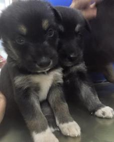 3 puppies not from petshop muscat.jpg2