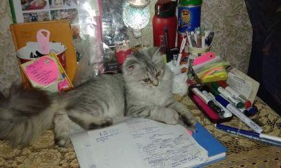 kitty missing cat sidab.jpg1