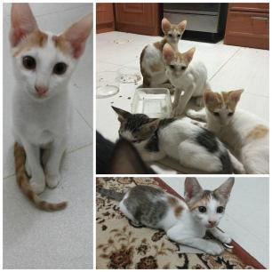 8 kittens oman