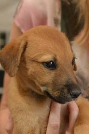 6 puppies for adoption