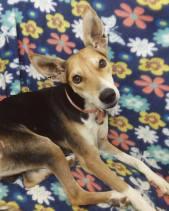 ringo pets for free adoption not sale Muscat Oman.jpg2