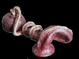 Serpent rose à ventouse des marais