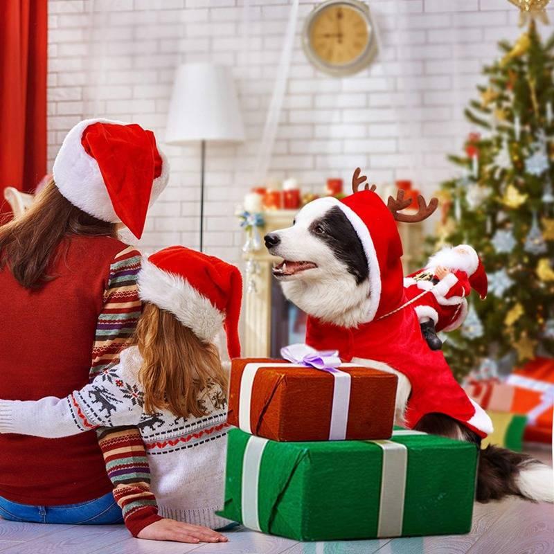 Dog's Christmas Themed Costume