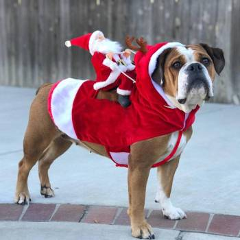 Dog's Christmas Themed Costume