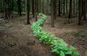 alberi-3
