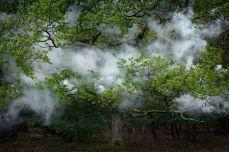 alberi-5