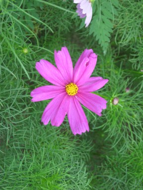 Flower, Alligator Wildlife Preserve