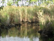 Alligator Wildlife Preserve
