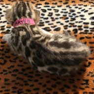 Adore Cats Eartha Back