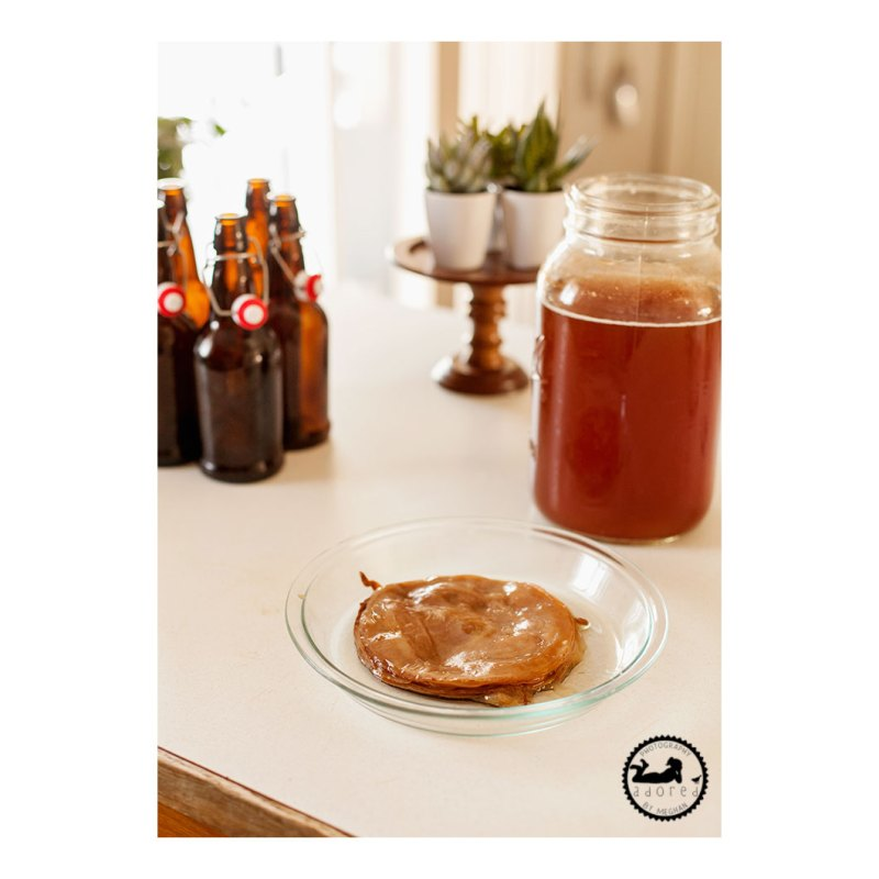 Scoby from homebrew kombucha