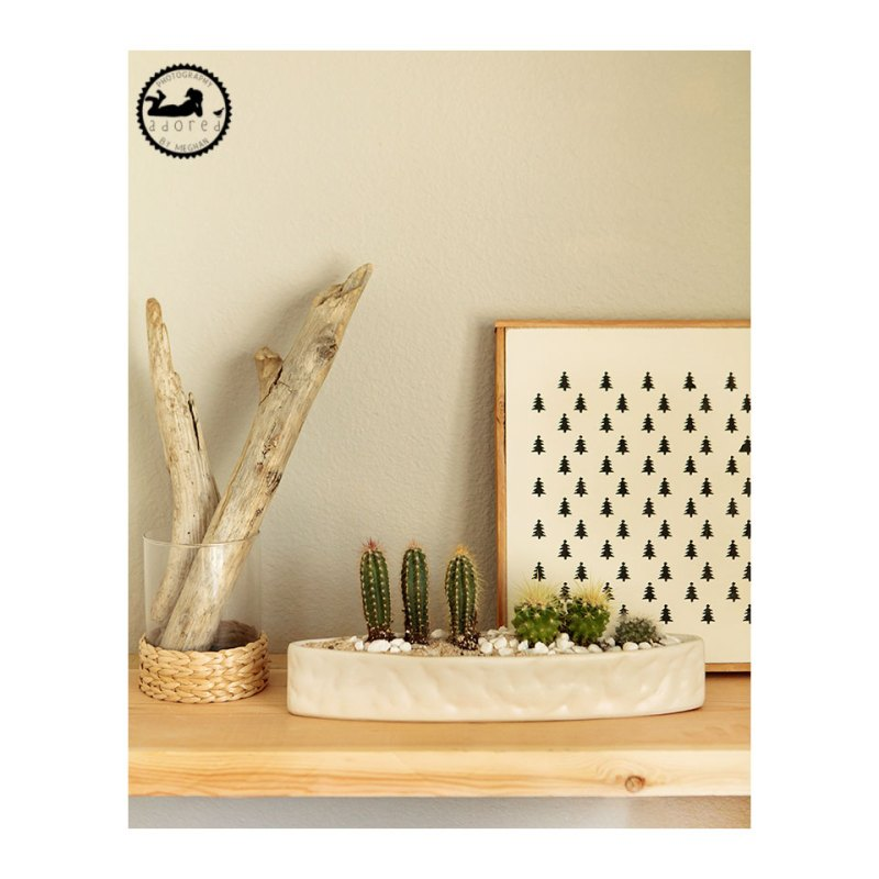 Cacti display on bookshelf with driftwood and graphic print