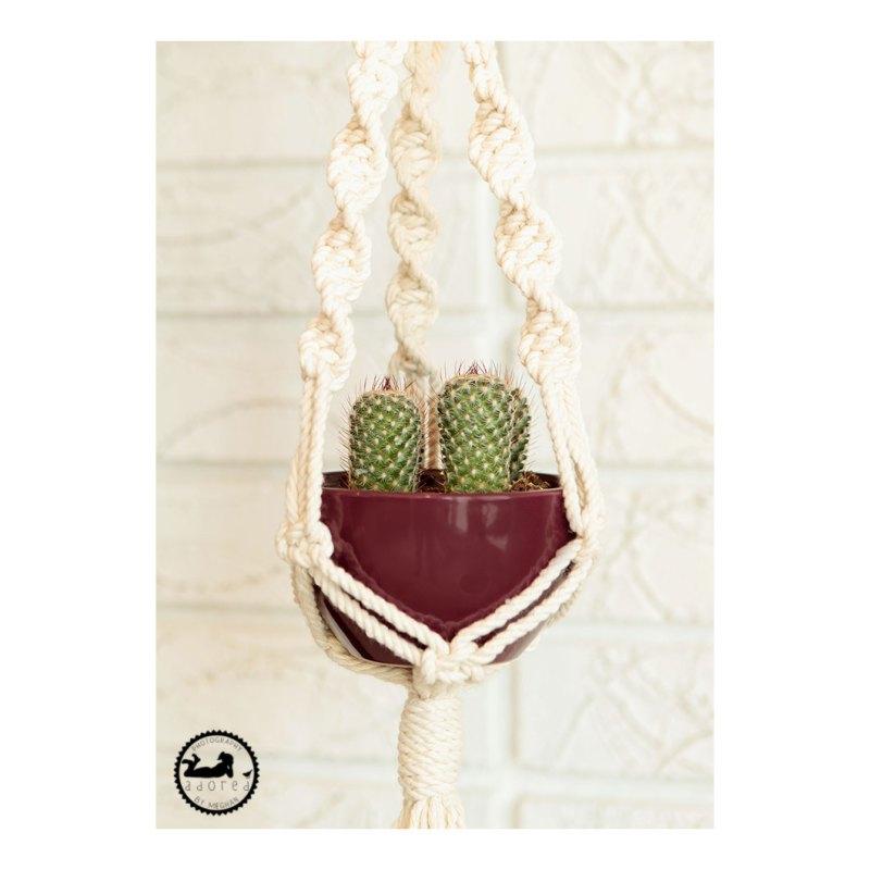 Cacti hanging in macrame