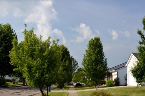 trees sky garages