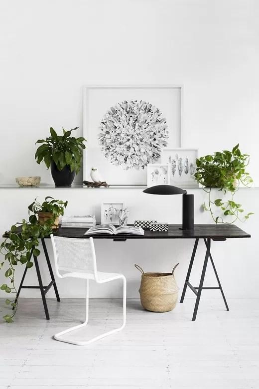 plantas no home office 2
