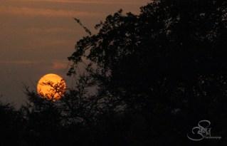 Sunset at Wardha Nagpur Road