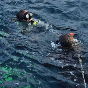 Curso de mergulho PADI - Adrenailha Floripa
