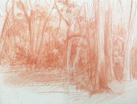 Adriana Burgos, sketchbook drawing , woods at Jekyll, sanguine