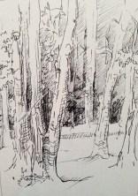 Adriana Burgos, Sketchbook study of woods using pitt pens.