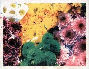 Imagem impressa com Goma Dicromatada - 4 cores