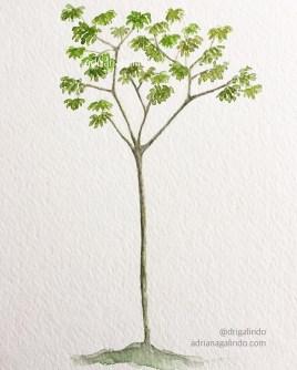 Embaúba, árvore 34/ brazilian tree, n.34, 15x 21 cm, Available/disponível