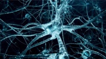 dezvoltarea cerebrala copil