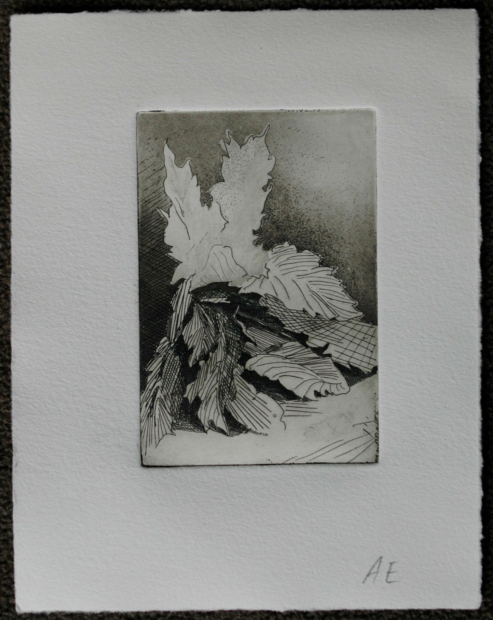 State 5: This print is the same as the last, only it was made with dark brown ink instead of black ink. The resulting print is a bit warmer than the previous.