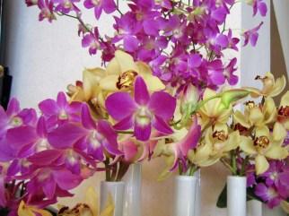 Adriano_gronard-paisagismo-arfquitetura-orquídea-dedobrium-