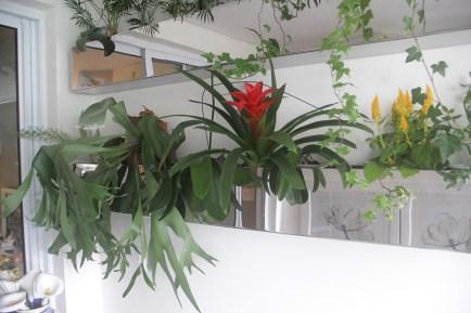 🔎 Detalhe 😉 da floreira da varanda do post anterior! Guzmânia, hera e celosia!🌴🌼🌱🌿 📷 Adriano Gronard 🖥️ www.adrianogronard.com.br