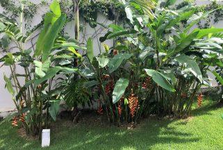 adriano-gronard-arquitetura-interiores-paisagismo-jardim-bananeira-do-brejo-costela-de-adão-adrianogronardphoto
