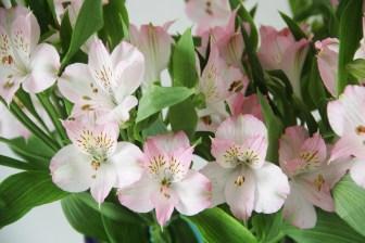 adriano-gronard-paisagismo-astromelia-rosa-clara-vaso-arquitetura