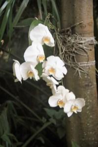 adriano-gronard-paisagismo-orquidea-adrianogronardphoto