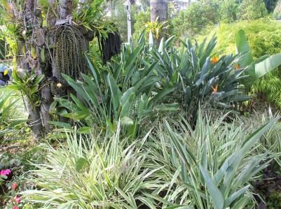 adriano-gronard-paisagismo-orquideas-dionela-bambu-strelitzia-adrianogronardphoto