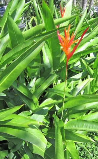 caete-heliconia-adriano-gronard-paisagismo