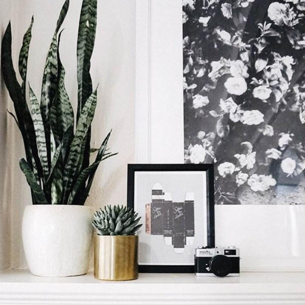 Dormir com plantas! Espada de São jorge em vaso. Sim! É possível tê-la em seu quarto. Note que, à sombra, ela adquire uma coloração mais escura que em canteiros abertos ao ar livre. Imagem: Wit & Delight
