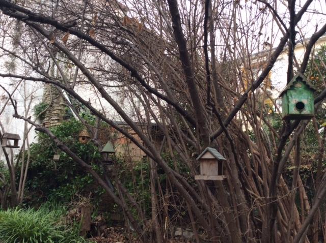 Nel vecchio giardino senza le vecchie voliere scomparse