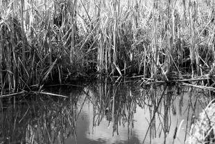 Reeds 3_DSC5768