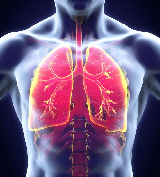 Plămânii